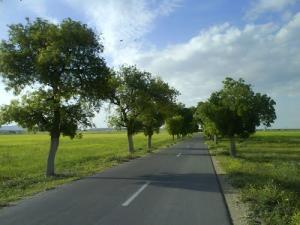 Autoroute dans la périphérie de Oum el Bouaghi