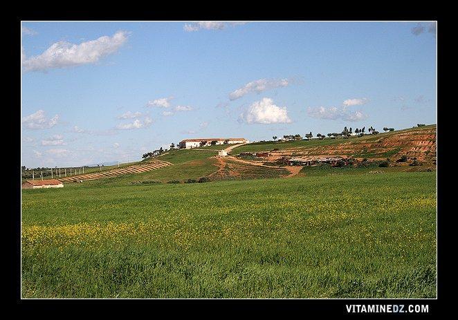 الحقول الخضراء المحيطة بقرية شباط اللحم