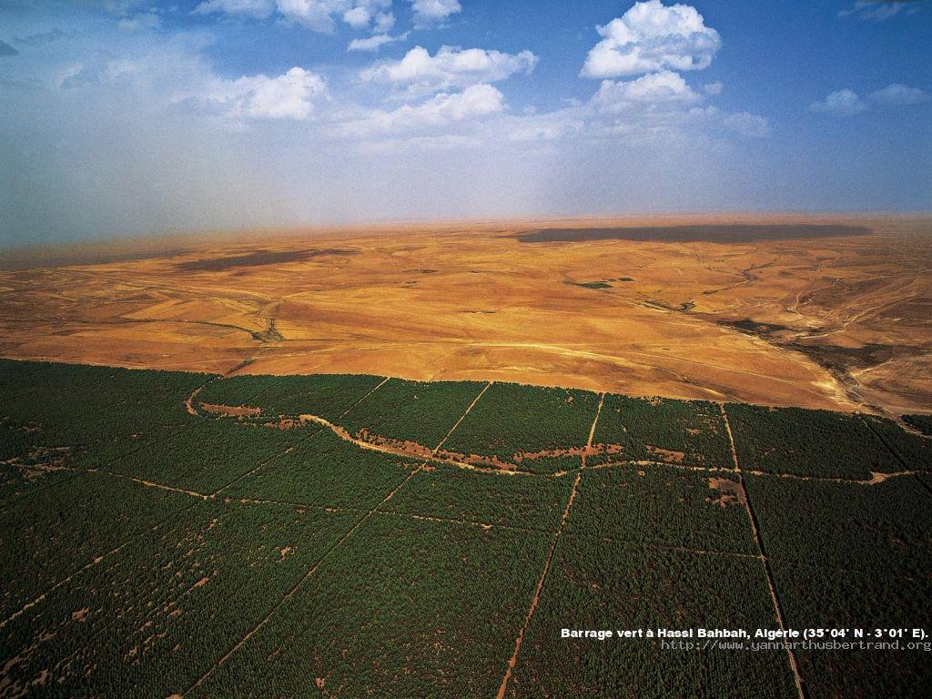 صورة من السد الأخضر في حاسي بحباح