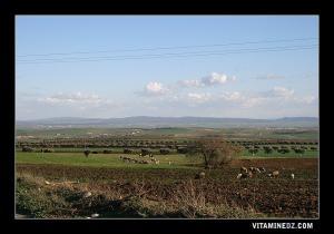 الحقول الزراعية ببلدية تسالة