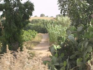 منظر طبيعي من بلدية عشعاشة