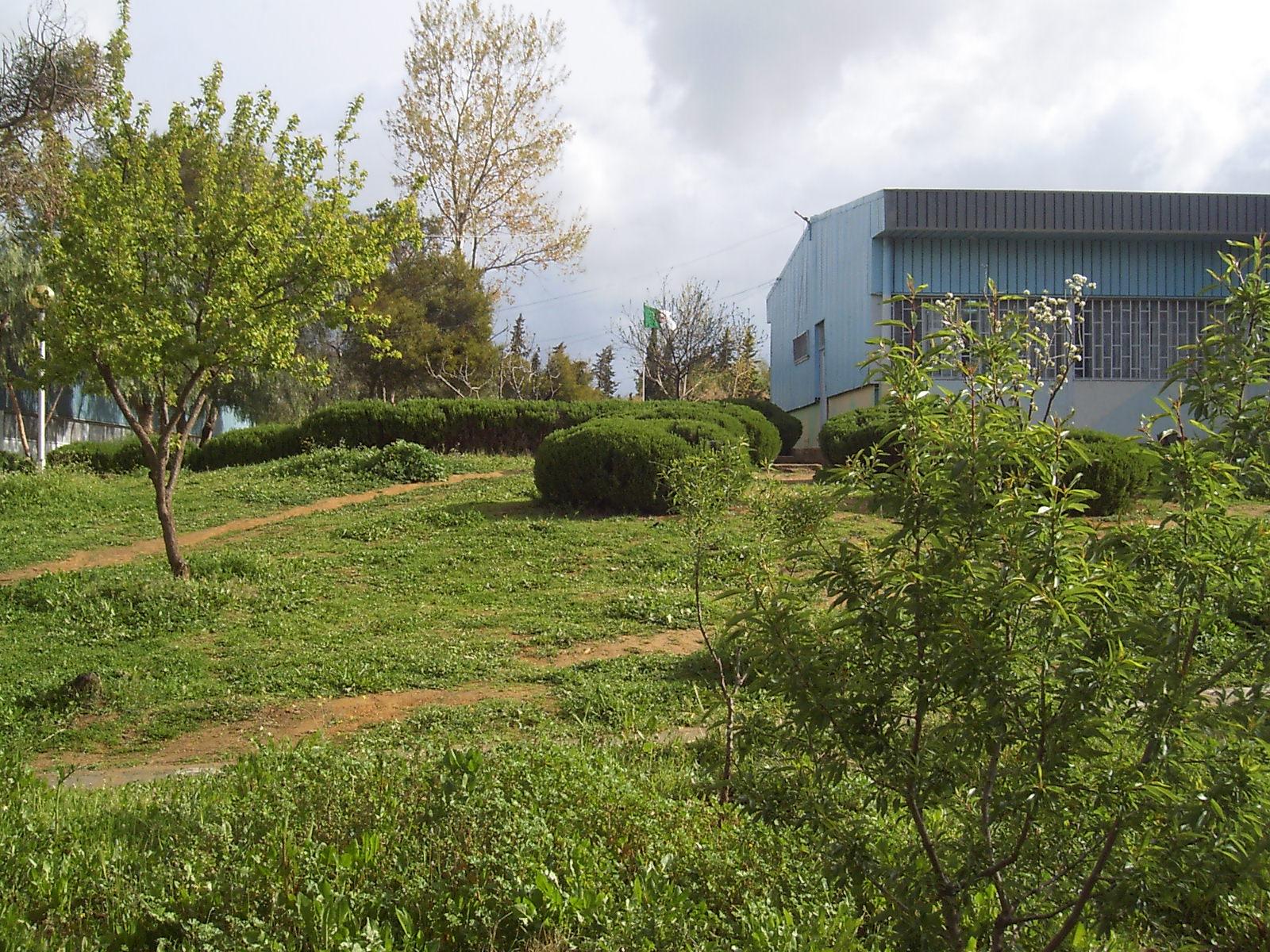 الحديقة الداخلية لمركز التكوين المهني ببلدية الغمارية