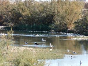 Des oiseaux dans une guelta d'Ourlel
