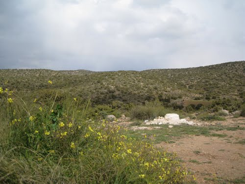 Verdure de la commune de Ain Zaatout