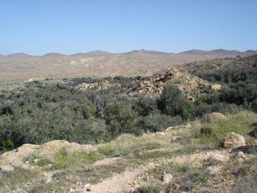 Forêt de Ain Zaatout