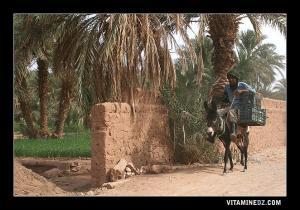 سكان قرية زاوية الشيخ