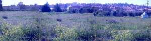 منظر من بلدية المطمر