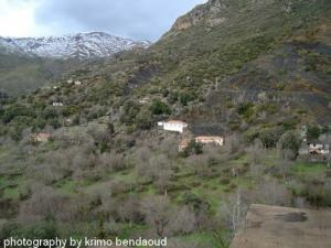Forêt de Oued El bared
