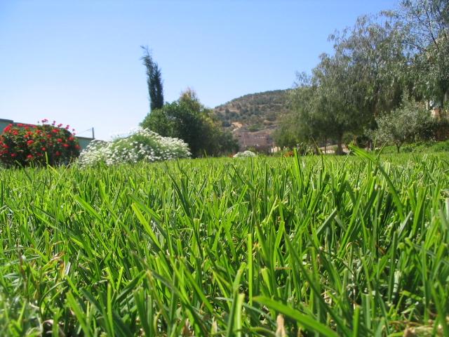 الحقول الخضراء 1