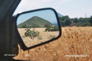 حقول القمح ببلدية دومية