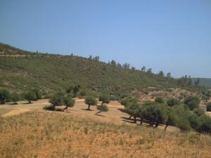 Vue sur la Forêt de Djendel Saadi Mohamed