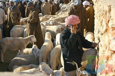 السوق المحلي لمدينة أولاد جلال (ولاية بسكرة) (1)