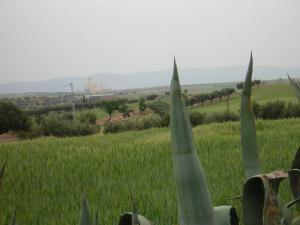 صورة لحقول القمح ببلدية بوخنافيس