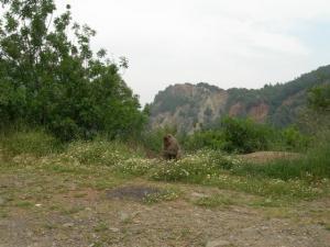غابات وادي القردة ببلدية شيفة