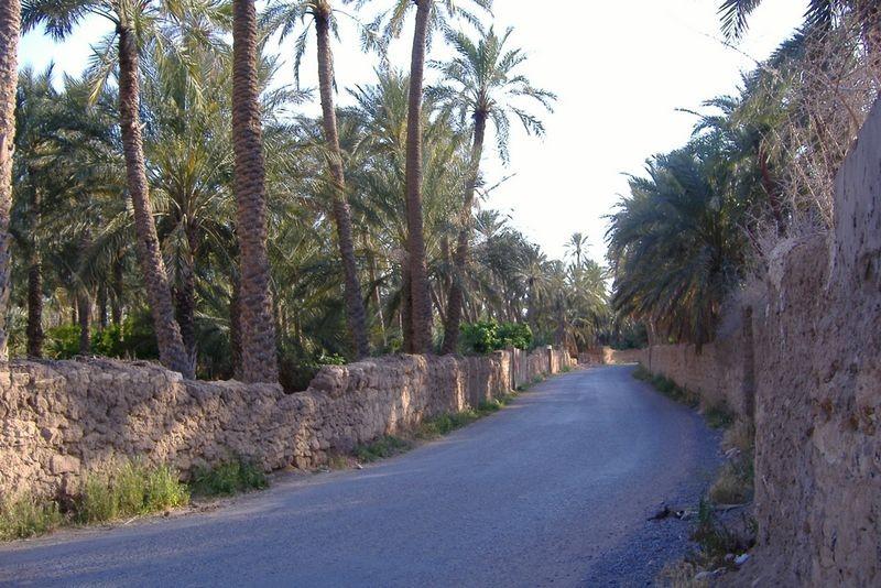 رحلة إلى بسكرة بالجنوب الجزائري 82704-photo