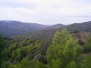 غابات منطقة العمارية