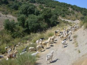 تربية الماشية بضواحي قرية بني غبولة أجمعة 7