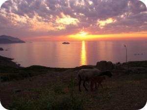 غروب الشمس على ساحل شطايبي