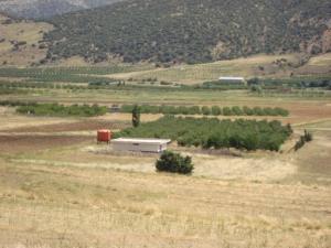 حقول شجر التفاح ببلدية إشمول (ولاية باتنة)