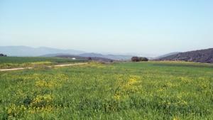 Végétation et Fleurs Sauvages dans la Région de Meguesmia