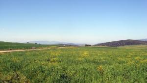 Paysage Printanier dans la région de Meguesmia