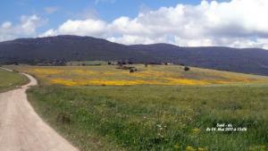 Bouchegouf (Route menant a Sidi dhaif)