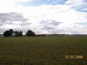 Champs agricoles à Guelma