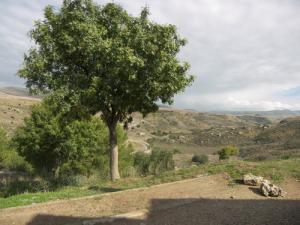 Paysage de Ain El Arbi à Guelma