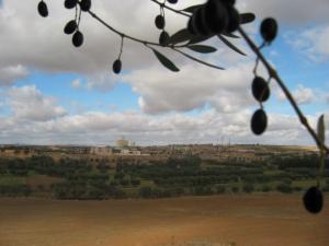 صورة من ضواحي قرية طابية
