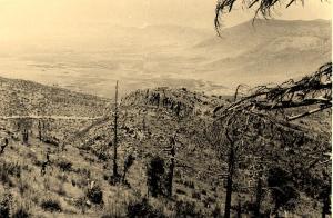 صورة لغابة الفلين في سنة 1964
