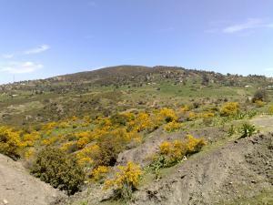 صورة من منطقة عسول