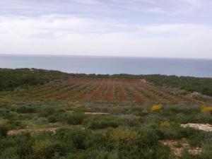 Champ agricole de Sidi Lakhdar