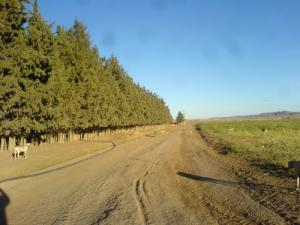 Paysage pastoral près de Msila