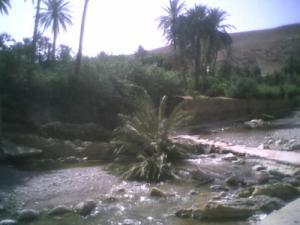 Un Palmier se Noie dans la Oued de Bou Saada )