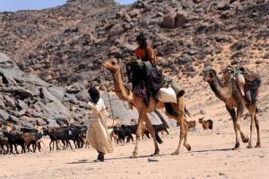 Nomades gardiens de chèvres (Wilaya d'illizi)