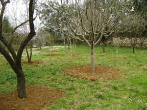 الحقول الخضراء لقرية أيت عڨاد