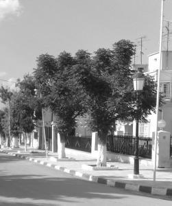 شوارع بلدية عين لشياخ