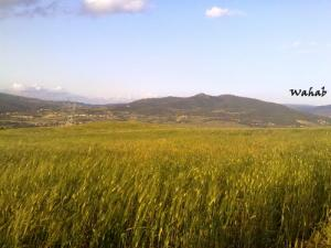 Les Champs de blé sur la Route de Seliana