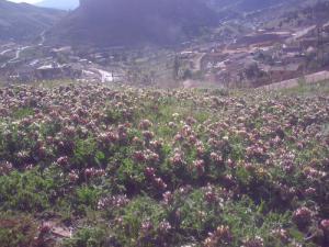 Floraison de Printemps dans la périphérie de Boucaid