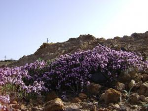 Les Fleurs de Hananchana