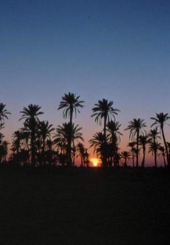 Coucher du Soleil sur une Oasis d'El Oued
