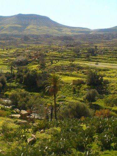Verdure dans la commune de Yabous
