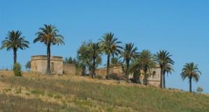 Damous ( Caustillasse ) Une bâtisse de l'époque française en ruine