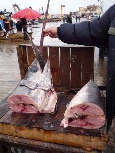 Le marché au poisson de Bou Haroun