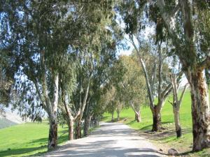 Route d'El Kafor
