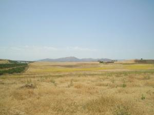Terrains Agricoles au printemps