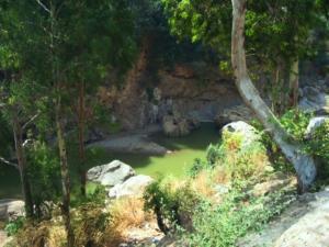 وادي من غابة شيفة