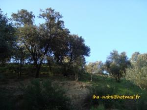 منظر طبيعي بضواحي بلدية واسيف (ولاية تيزي وزو)