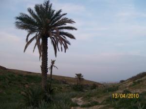 Palmiers El-guettar
