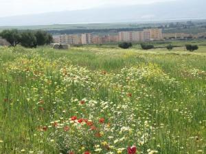 Fleurs Naturelles poussant dans les champs de Ouarizane au Printemps